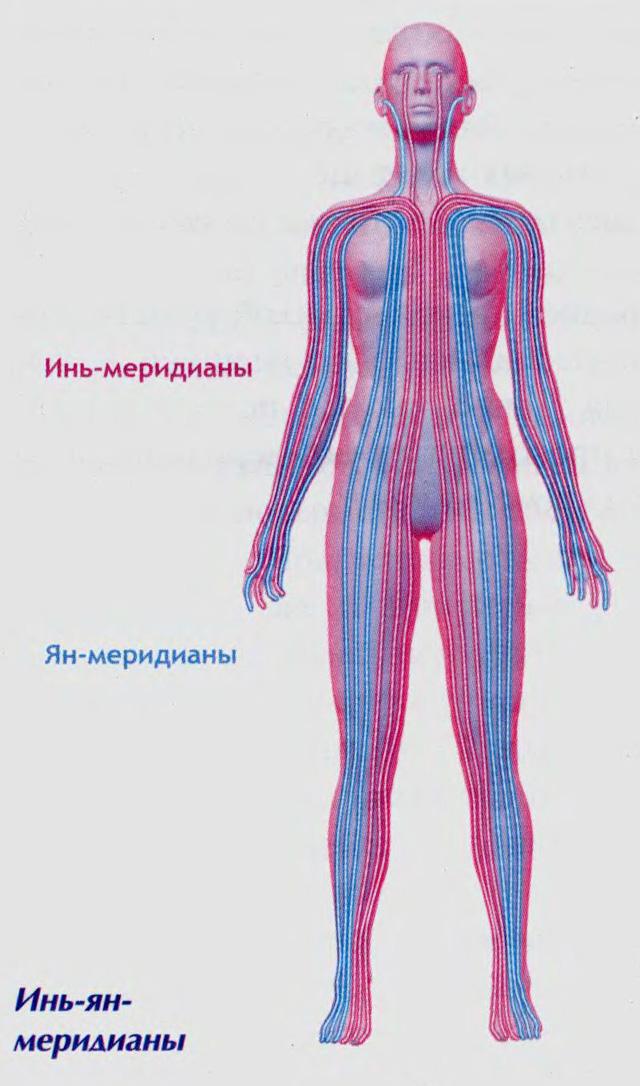 Меридианы человека