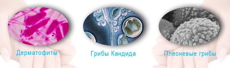 Причины развития ногтевых грибков - микозов